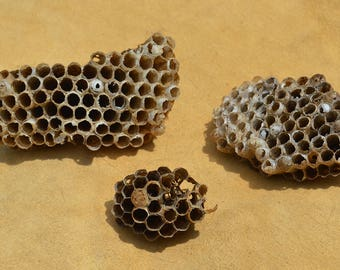 Wasp Nest Lot of 3