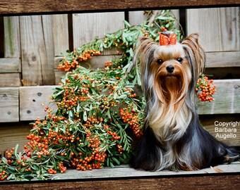 Yorkie Doormat, Yorkie Gift, Yorkie Floor Mat, Yorkie Art, Yorkie, Yorkshire Terrier