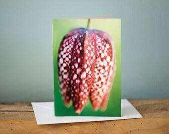 Greetings Card - Fritillary - Floral