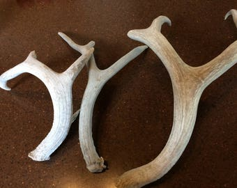 Antler Assortment,  Deer Antlers, Craft Supply