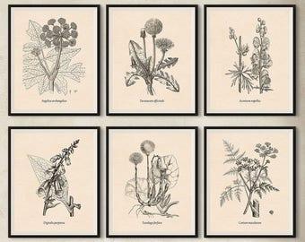 Instant download printable art, Set of 6 vintage botanical medicinal plants illustrations, Medicinal herbs, Wild flower prints, Antique art