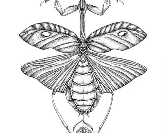 Mantis + flower
