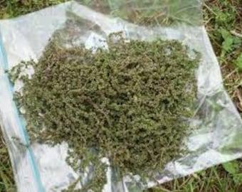 wild nettle seeds 1 oz.