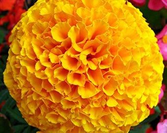 Chakra Activating Yellow Marigold Essence