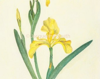"Yellow iris 5 x 7"" card with envelope"
