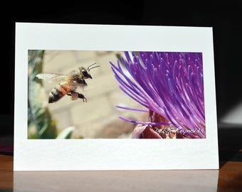 Honey bee photo