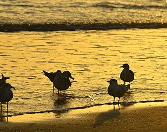 Seagulls on a beach at sunset