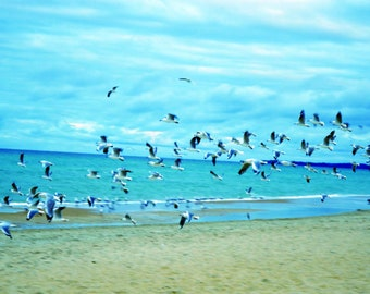 Print of a Flock of Seagulls
