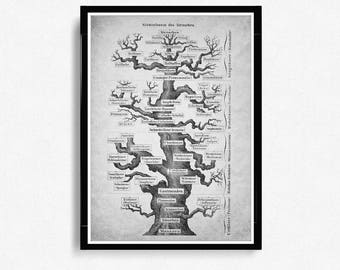 Haeckel Evolution Print, Vertebrate Tree Of Life, Evolution, Paleontology, Evolutionary process, Geology Student Gift, Science print *8*