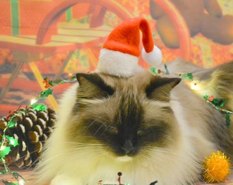 Christmas hat for kitten - hat for cat - hat for bunny - hat for puppy - elf hat for pet - red and white Christmas hat