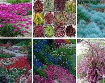 Rockery garden mixed flower seeds (6 variety)