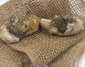 Fossilized Clam With Golden Honey Calcite Specimen - Natural Gemstone - #C4