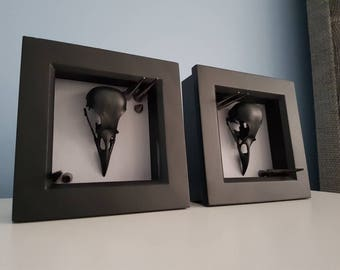 x2 Real English Magpie Skull - With Large Spikes