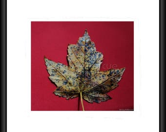 Maple Leaf, Photography, Print, Framed Print, Canvas Wrap, Canvas With Floating Frame, Wall Art, Home Decor, Nature Photo, Nature Pic, Art