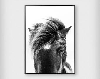 Horse Print | Nature | Black - White | Stallion - Photography - Poster