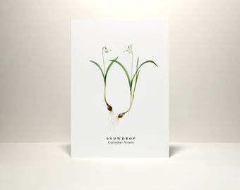 Snowdrop: Greeting Card