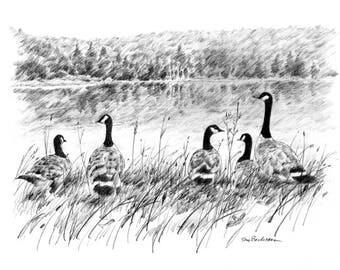 Canadian Geese, Spruce Knob Lake West Virginia, Original Pencil Drawing Wall Art