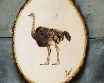 Wood-Burning: Ostrich