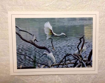 Hand Made Blank Photo Note Card-09 Egret
