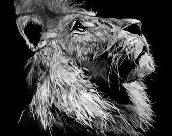 Table modern pastel 1 lion. The Lion savage animal painting