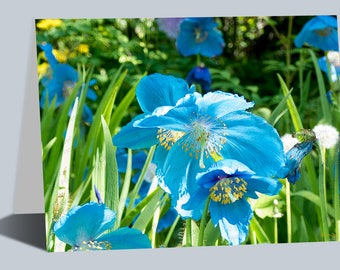 Alaskan Blue Poppy Greeting Cards, Unique Blue Flowers, Flower Art, Flower Gifts Cards, Blank Cards, Any day cards, Fine Art Card, Notecards