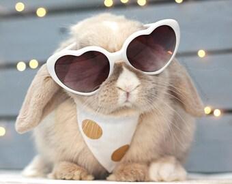 GOSH SPOTS Bunny Bandana