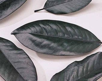 Preserved Magnolia Leaves | Dried Magnolia Leaves | Dried Leaves | Dried Decor