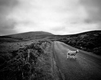 Irish Road | Ireland | Fine Art Print