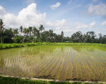 Bali Fields Travel Photo, Large Wall Decor, Landscape Photography, Contemporary Art, Photos on Canvas
