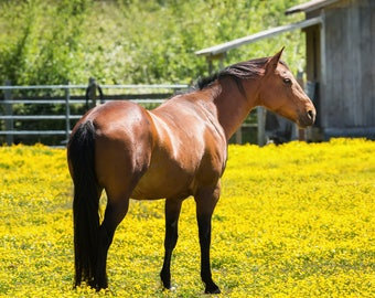 Horse and Yellow Flowers