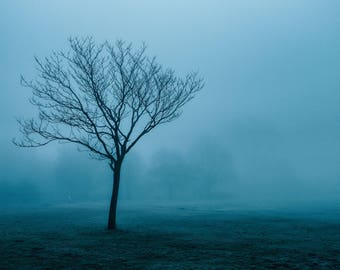 Fine Art Photography, Limited Edition Print, Photography Prints, Colour Photography, Tree, Winter, Nature