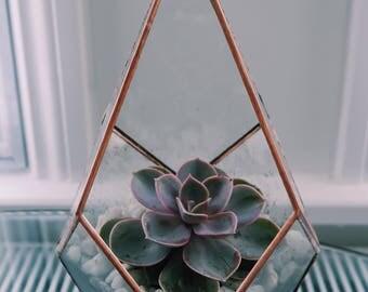 Diamond Copper Terrarium & Succulent