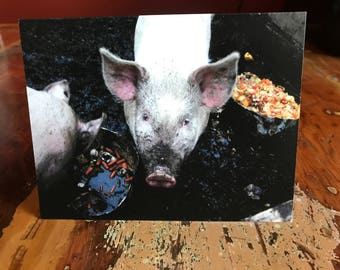 You're Radiant Pig Note Card
