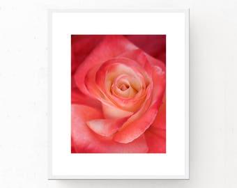 Pink and Cream Rose Print - Digital Download, Cream Rose Art Print, Printable Wall Art, Pink Rose Poster, Pink Decor, Flower Print Pink Rose