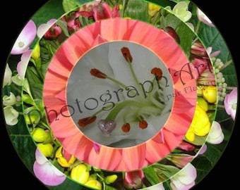 Photography art - circle of flowers - 2:30 x 30 cm