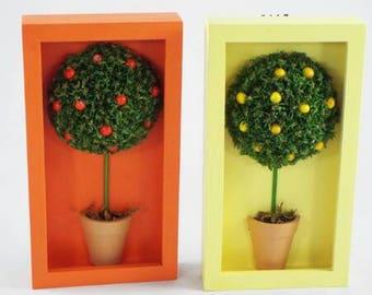 Orange & lemon tree pictures