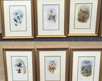 Set of 6 Birds Prints