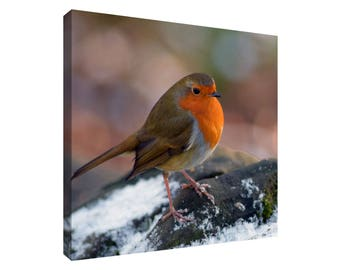 Robin Picture on Colour, Black and White or Sepia Background Square Canvas Wall Art Print
