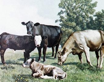 Crossbred Calves