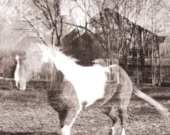 Ghostly horse: Double Exposure 11x14 Canvas