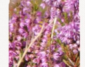 iPhone Case - Purple Lavender