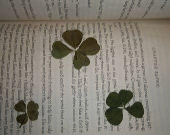Collection of 3 Four Leaf Clovers