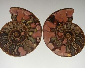 Pinkish ammonite pair