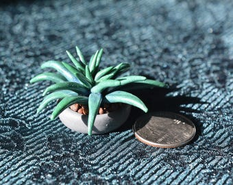 Mini Dark green Succulent
