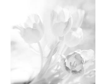 White Tulip Photograph, White Tulip Wall Art, Tulip Decor, Flower Photography