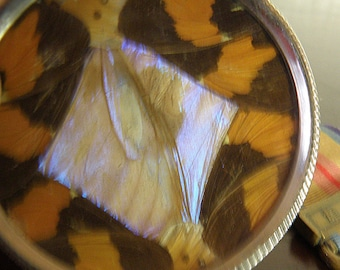 Zitrin Irmaos Tiny Butterfly Wing Plate