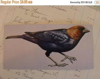 ONSALE 6 Amazing Vintage Bird Flash Card Lot