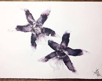 Orchids (original)