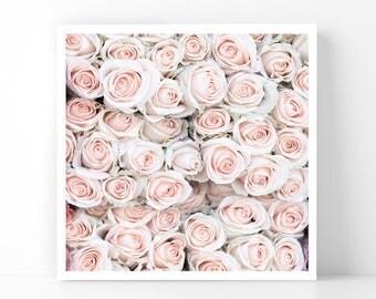 Paris Photography - Pale Roses in Paris, 5x5 Paris Fine Art Photograph, French Home Decor, Wall Art, Paris Gallery Wall