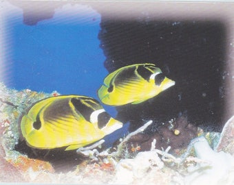 Jumbo Kids Sticker 2 Yellow and Black Fish Swimming in the Ocean Decal Scrapbooking Blue with Coral